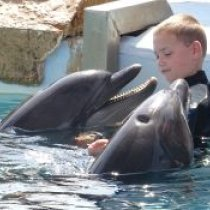 Delfíny pre Alexa